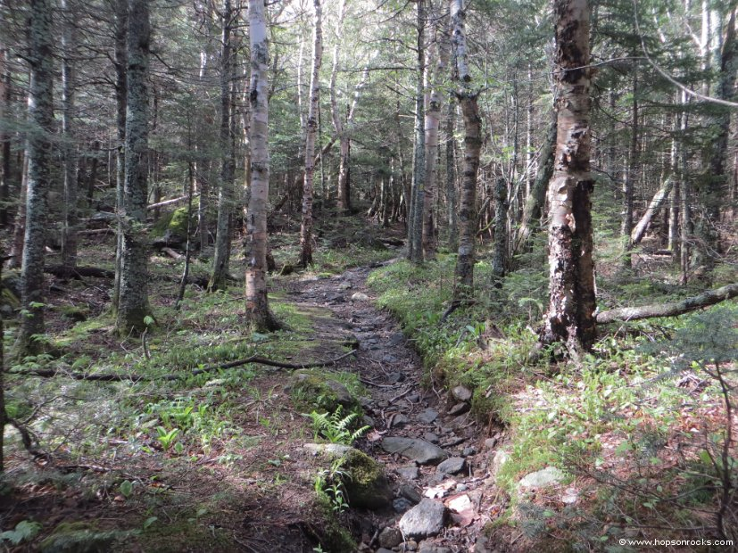 Northern Presi Trails